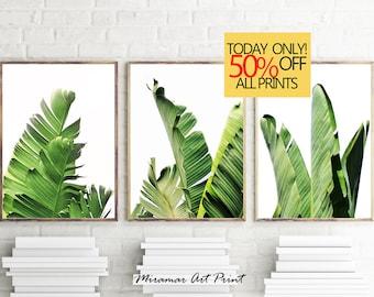 Banana Leaf Print, Banana Leaves Print, Set of 3 Print, Coastal Wall Art, Set of 3 Wall Art, Succulent Print, Banana Leaves Photography