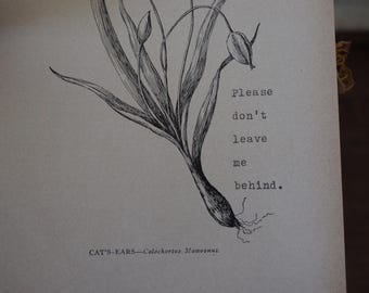 Cat's-Ears - Please don't leave me behind - Vintage Botanical Plate with Original Typewriter Message