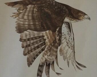 Print from original watercolour painting - buzzard - fine art