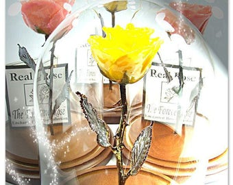 Forever Rose - The Beauty and the Beast Rose - Enchanted Rose - This is a Real Yellow Rose preserved to last FOREVER!