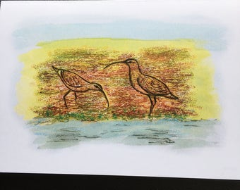 Bird art greetings card from an original drawing of curlew on green.
