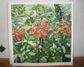 Artist Print Azalea Spring Summer Unframed Original Nature Appalachia NEW