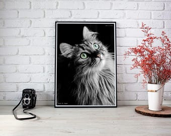 eyes of cat, photographic print, print, animals, fine art, photography, painting, cat
