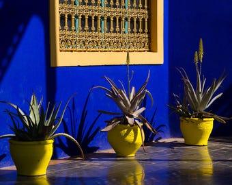 Blue and Yellow - Majorelle Gardens , Marrakech ,Morocco