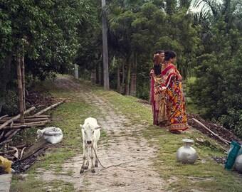 White Calf - Travel Photography - India
