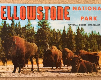 1957 Yellowstone National Park Postcard Booklet