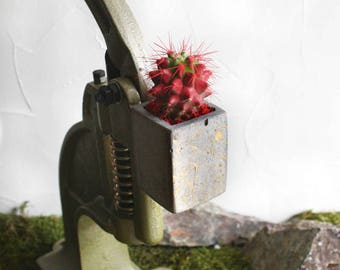 """Concrete fridge magnet with red cactus """"Icey Magneto"""""""