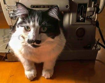 Cat In a Sewing Machine