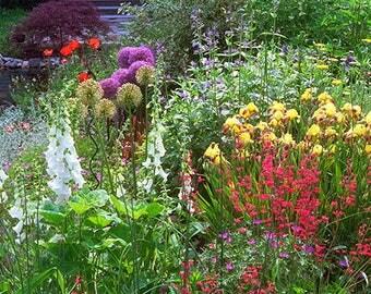 Flower Garden Print, Garden Photo,  Landscape Photography,  Nature Photography, Iris, Foxglove, Allium, Poppy, Heucera