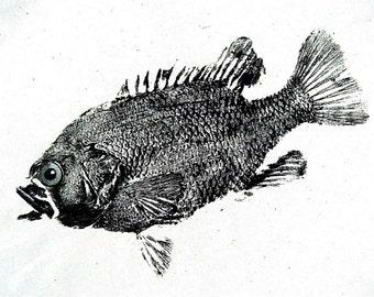 GYOTAKU fish Rubbing Rock Bass 8.5 X 11 quality Art Print Panfish Cottage Decor by artist Barry Singer