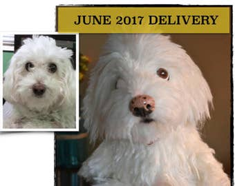 Custom Stuffed Dog - Pet Portrait - Pet Sculpture - Dog Memorial - Cat Memorial - Made to Order - Stuffed Pet Replica - JUNE 2017  Delivery