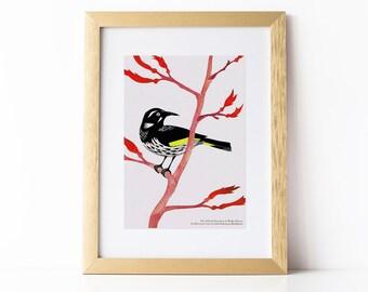 New Holland Honeyeater Illustration Print, Australian Native Bird Illustration