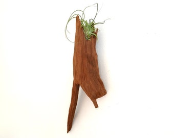Cypress Root Wall Planter