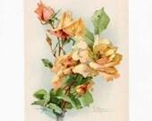 Antique Edwardian 1905 Vintage Catherine Klein Peach Color Roses Illustration, Bookplate  Print for Framing, Original Flowers Print