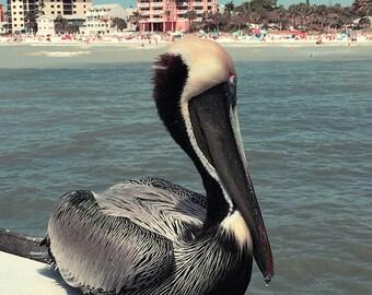 Florida Pelican Original Color Photograph Home Decor Gift