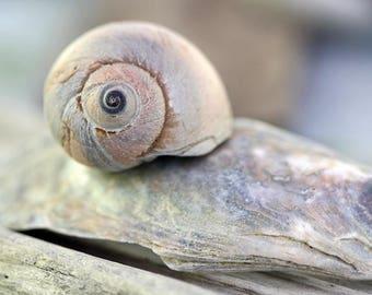 Seashell Still Life Custom Size Photo