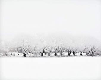 Winter landscape photography snow trees ice white nature woodland pale monochrome - 'Winter's day' 8 x 10