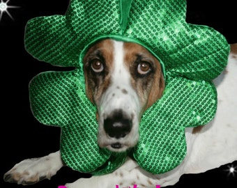 Shamrock hat for dogs and cats