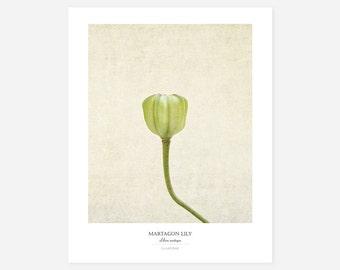 Martagon Lily Original Art Print - Botanical Wall Art - Flower Poster - Large Botanical Print - Gifts for Gardeners