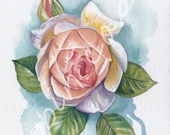 Peach Rose Watercolor Painting