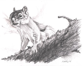 Red Squirrel, Moose Bog - Open edition print of an original drawing (fits 11x14 frame)