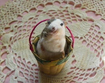 Taxidermy Mouse in a Vintage Mexican Basket. Sadie.