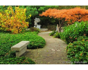 Fine Art Color Nature Photography of Fall Colors Along a Path in a Chinese Garden