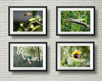 Nature photography, insect art, photography set, butterfly photo, bumble bee, caterpillar, june bug print, green garden prints, horizontal