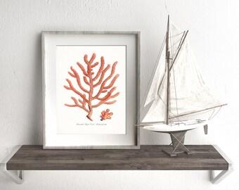 Coastal Decor Branched Finger Sea Coral Natural History Giclee Art Print 8x10 Coral