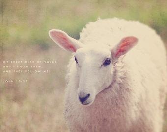 Lamb Photo, Sheep Art, Lamb Photography, Sheep Photography, Cute And Cuddly, Wall Art Decor, Sheep Photo, Lamb Art, Typography Photo