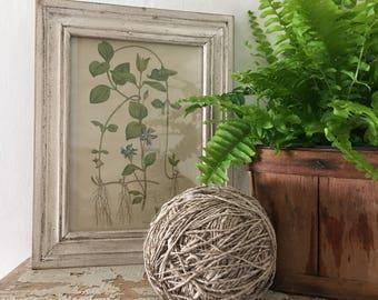 Vintage Style Botanical Print Vine