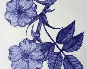 Wild DogRose Origanal Drawing Blue Ink on Paper