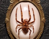 Ornate Brooch Big Ghost Spider Specimen in Resin Arachnid Cameo Entomology Goth Pin or Necklace
