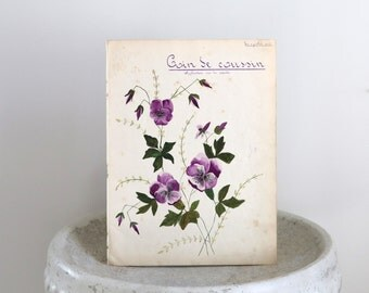 1909 Purple Antique Botanical from French Artist Portfolio  10 1/2 x 14 inches