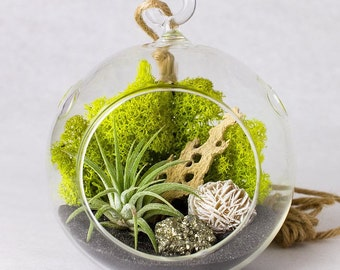 Hanging Terrarium Kit with Air Plant, Pyrite and Gypsum Desert Rose || Small Round
