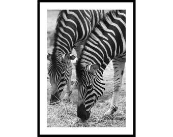 Zebra Wall Art, Twins Nursery Decor, Black and White Photography, Animal Print