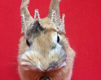 Taxidermy Rabbit/Bunny Head Mount #5 -French Style Decor-decor-crown