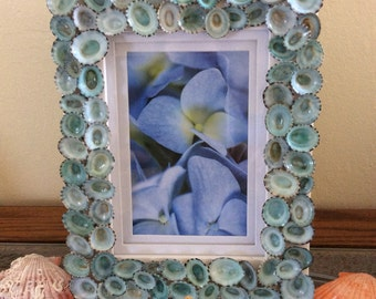 Blue Limpet Picture Frame-Ready to Ship