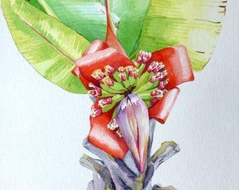Original Watercolor Painting of a Banana Flower