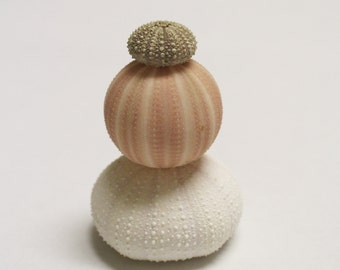Dusty Pink and White Sea Urchin Test (shell) Collection - an instant collection of urchin shells in hues of pale pink and white