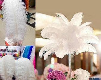 Jumbo  Ostrich Feathers 5  pcs  (GA,USA)