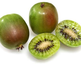 "Prolific Kiwi Vine - Hardy - Self Fruitful Female Variety - Easy to Grow - 2.5"" Pot"