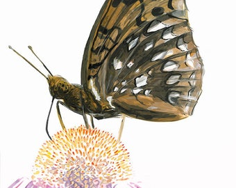 Spangled Fritillary - butterfly art print, insect ink drawing, bug illustration