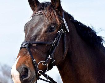 Leather Browband, Celtic browband, knot, fancy browband for dressage, showing, eventing. Horse, pony, harness
