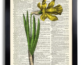 Yellow Daffodil Flower Art Print Vintage Book Print Recycled Vintage Dictionary Page Collage Repurposed Book Upcycled Dictionary 593