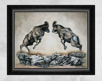 The Battle of Rams - Bighorn Sheep Print