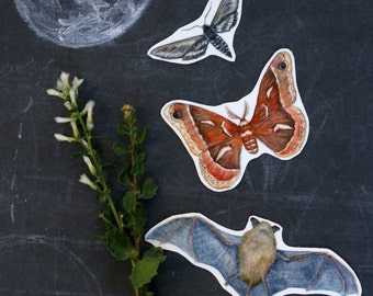 Echolocation Sticker Set: Three Vinyl Stickers, California Bat, Elegant Sphinx Moth, Ceanothus Moth