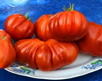 Italian beef tomato, Albenga 10 seeds