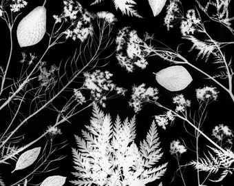 Give me nature - darkroom print - black and white - leaves and branches - 30x40cm