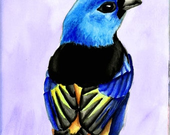 Seven Colored Tanager Watercolor Bird Print